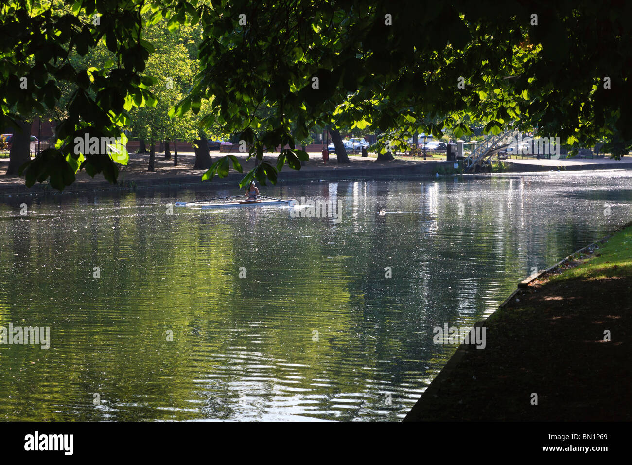 Woman skulling on the River Great Ouse in Bedford, backlit, a good illustration of Contre jour and overhanging shade, - Stock Image