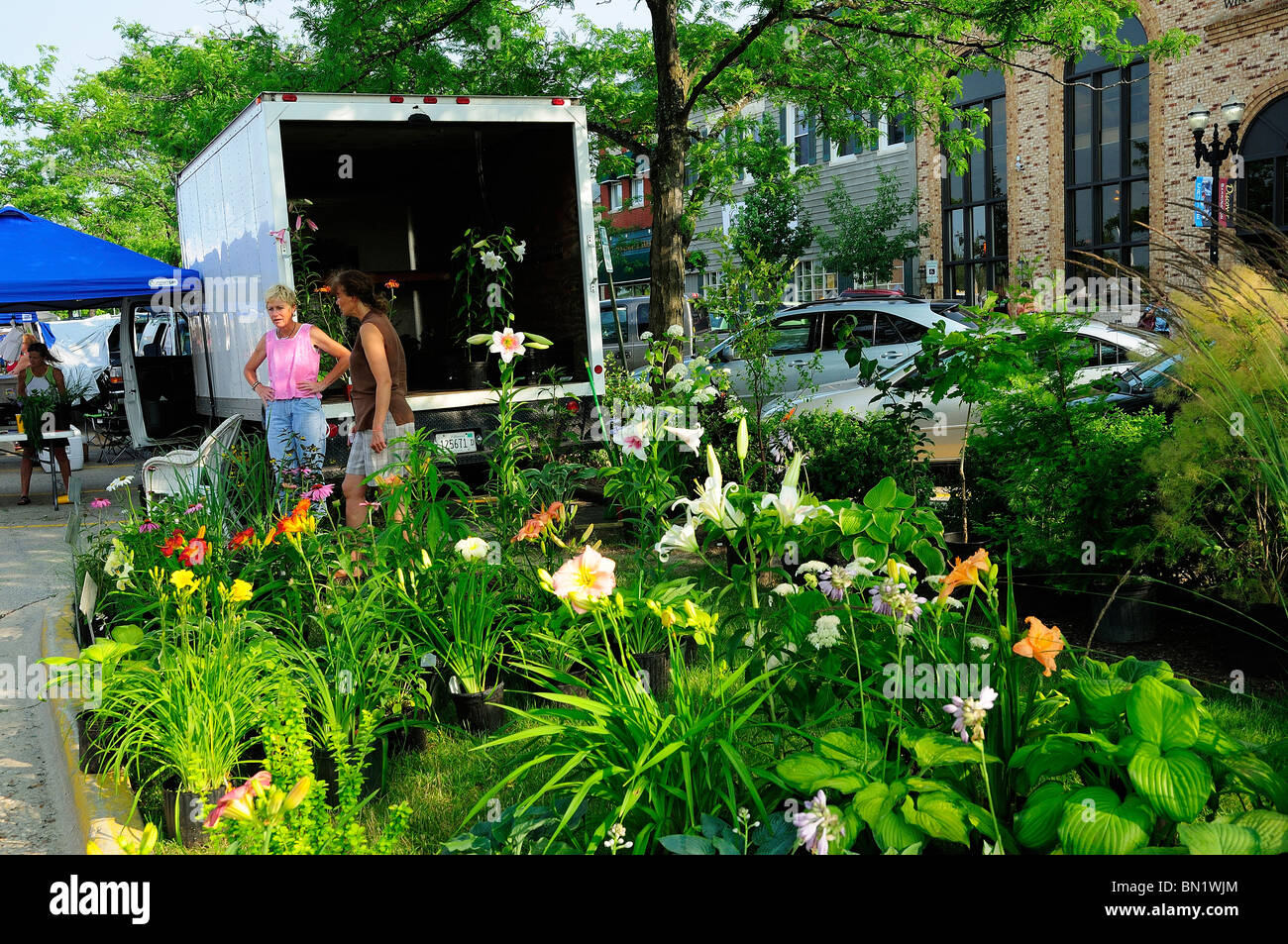 Fresh Farmers Market Perennial Flowers For Sale By Entrepreneurs