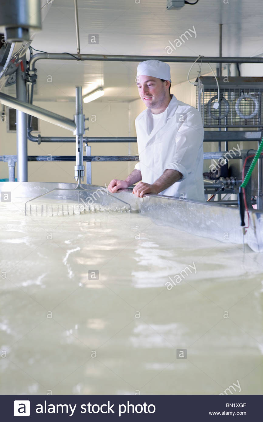 Cheese maker watching rennet and milk mix in vat to begin cheddar cheese making process - Stock Image