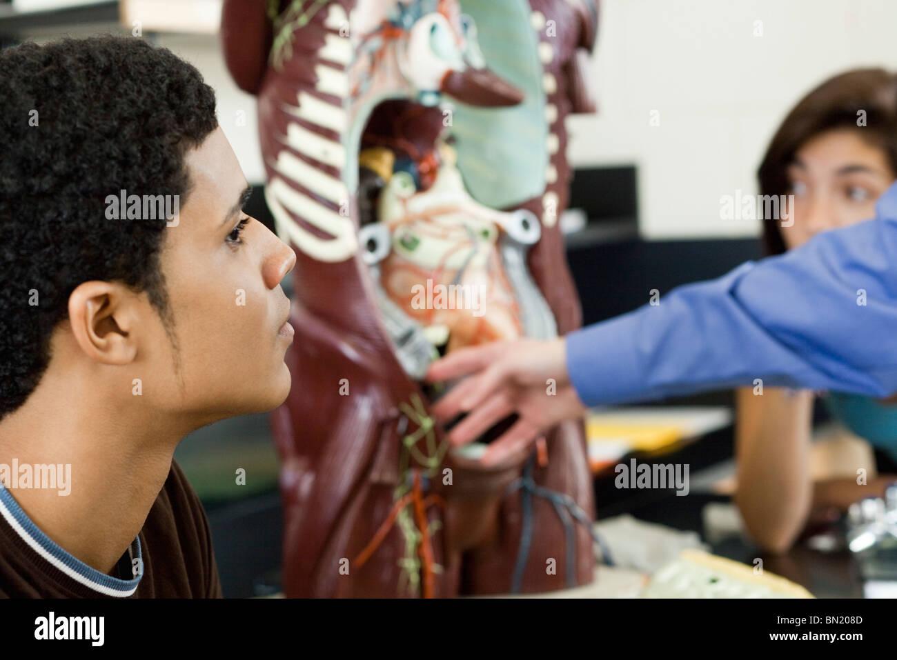 High school student learning anatomy - Stock Image