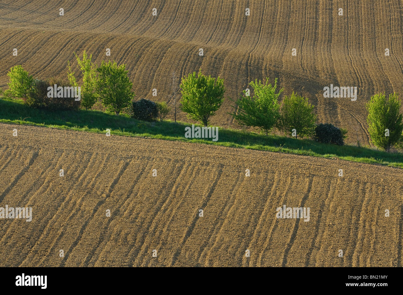 Paysage de champ dans le Lauragais. Haut lieu de l'agriculture notamment du colza, blé, .... - Stock Image