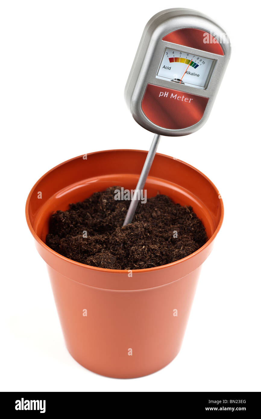 Ph meter soil tester 5 inch plastic pot with compost - Stock Image