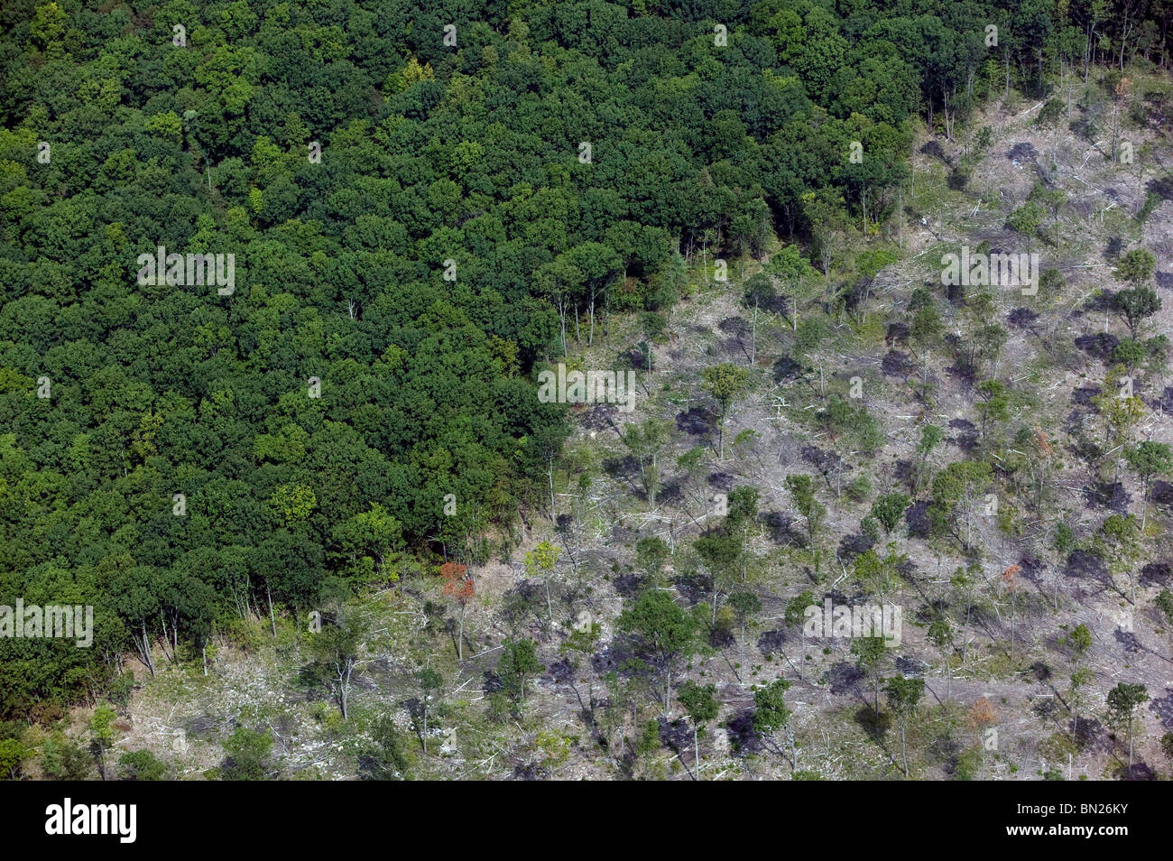 aerial view above clearcutting central Pennsylvania Stock Photo