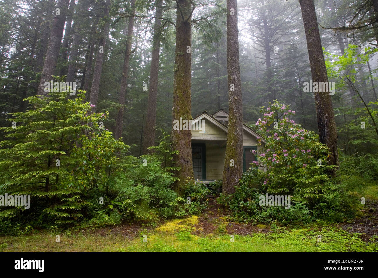 A cabin in the woods near odell lake in the oregon cascade for Cabin in the woods oregon