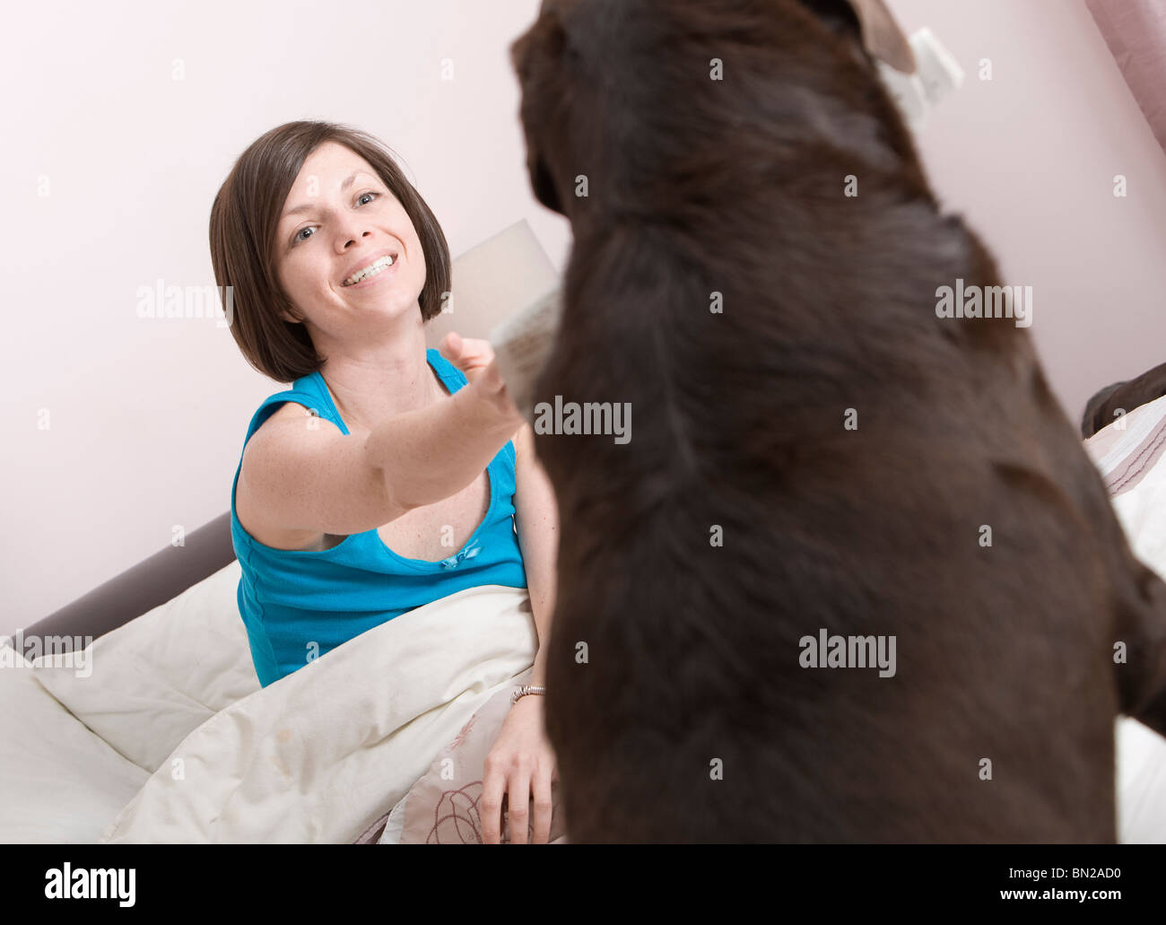 Dog Fetching the Morning Newspaper for Owner - Stock Image