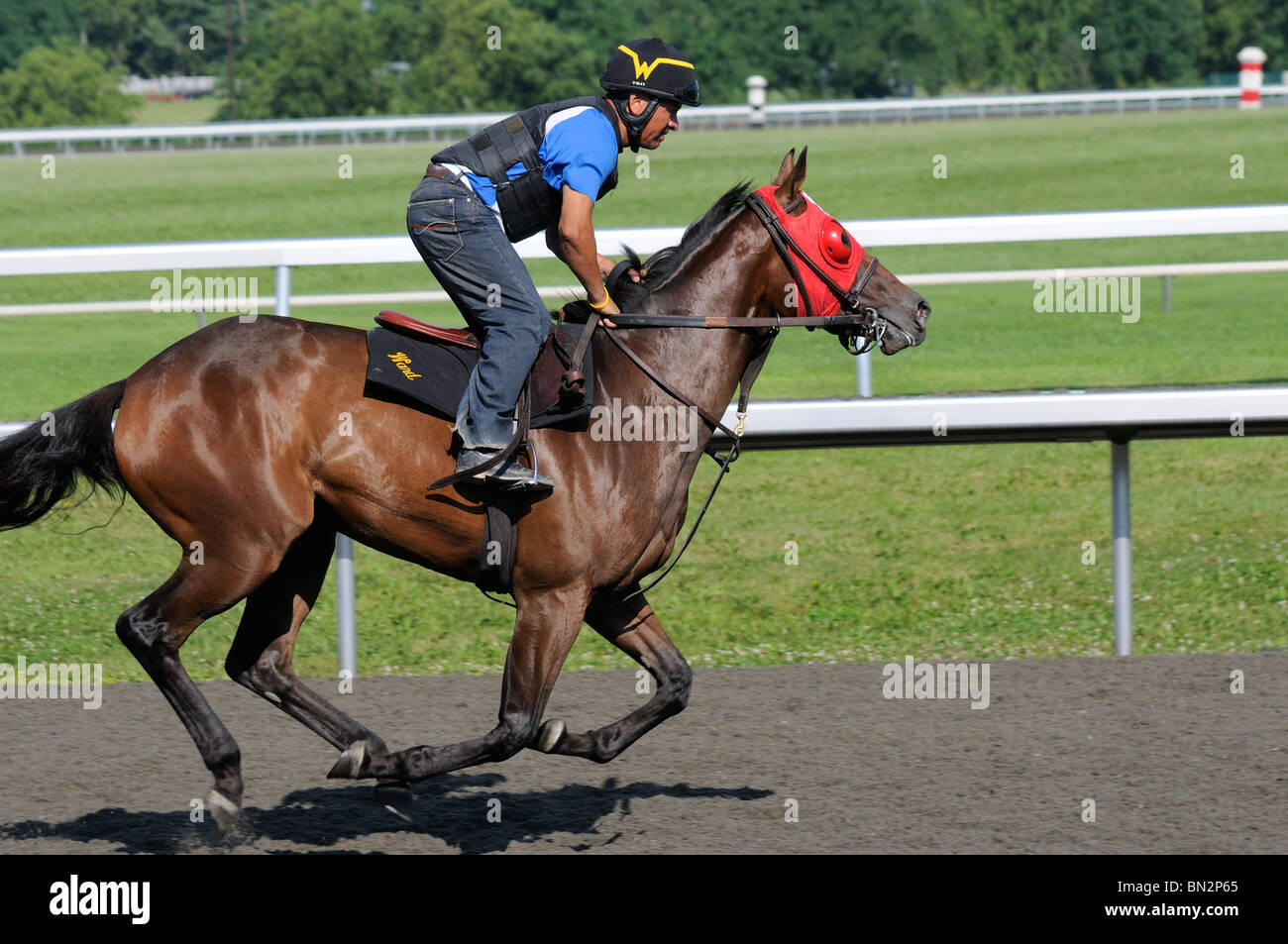 Thoroughbred horse and exercise jockey at the Keeneland horse racing track in Lexington, Kentucky USA - Stock Image