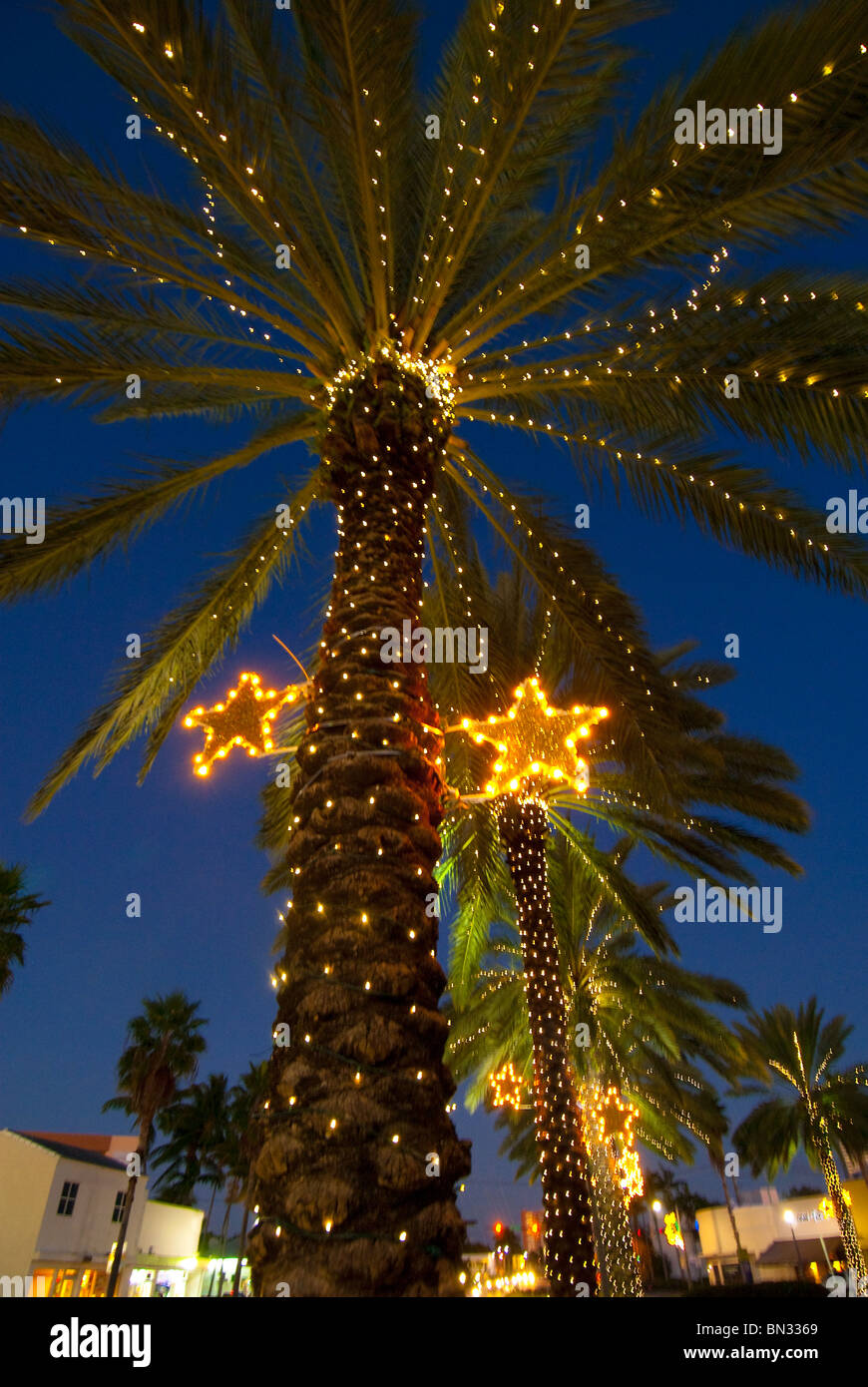 palm trees decorated with christmas lights in the normandy isle neighborhood in miami beach florida