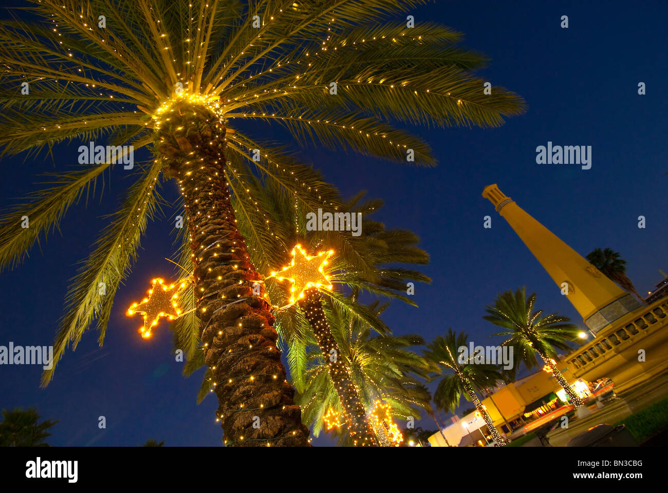 palm trees decorated with christmas lights in the normandy isle neighborhood in miami beach florida - Palm Tree Decorated For Christmas