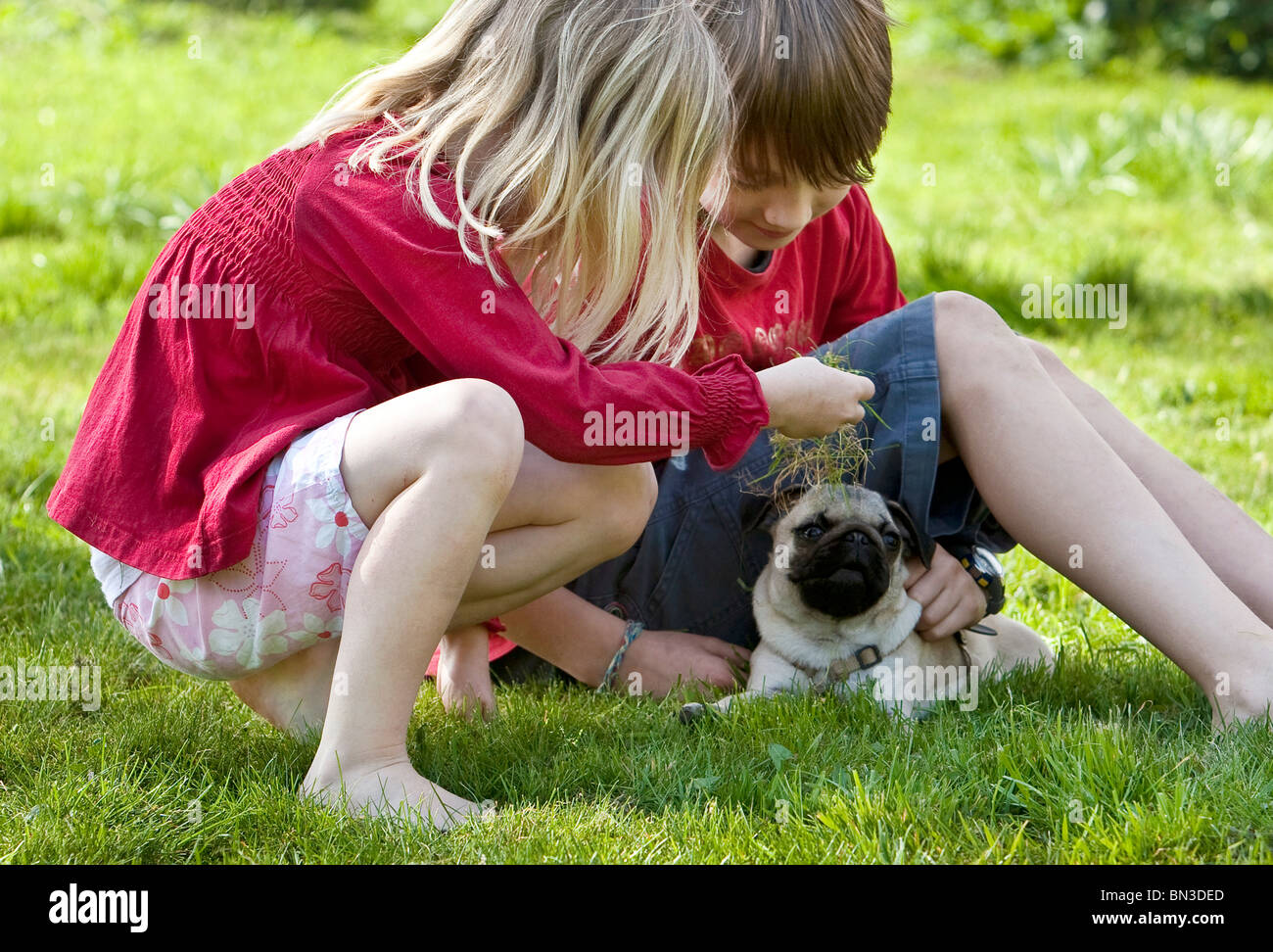 Boy, girl and pug on lawn - Stock Image