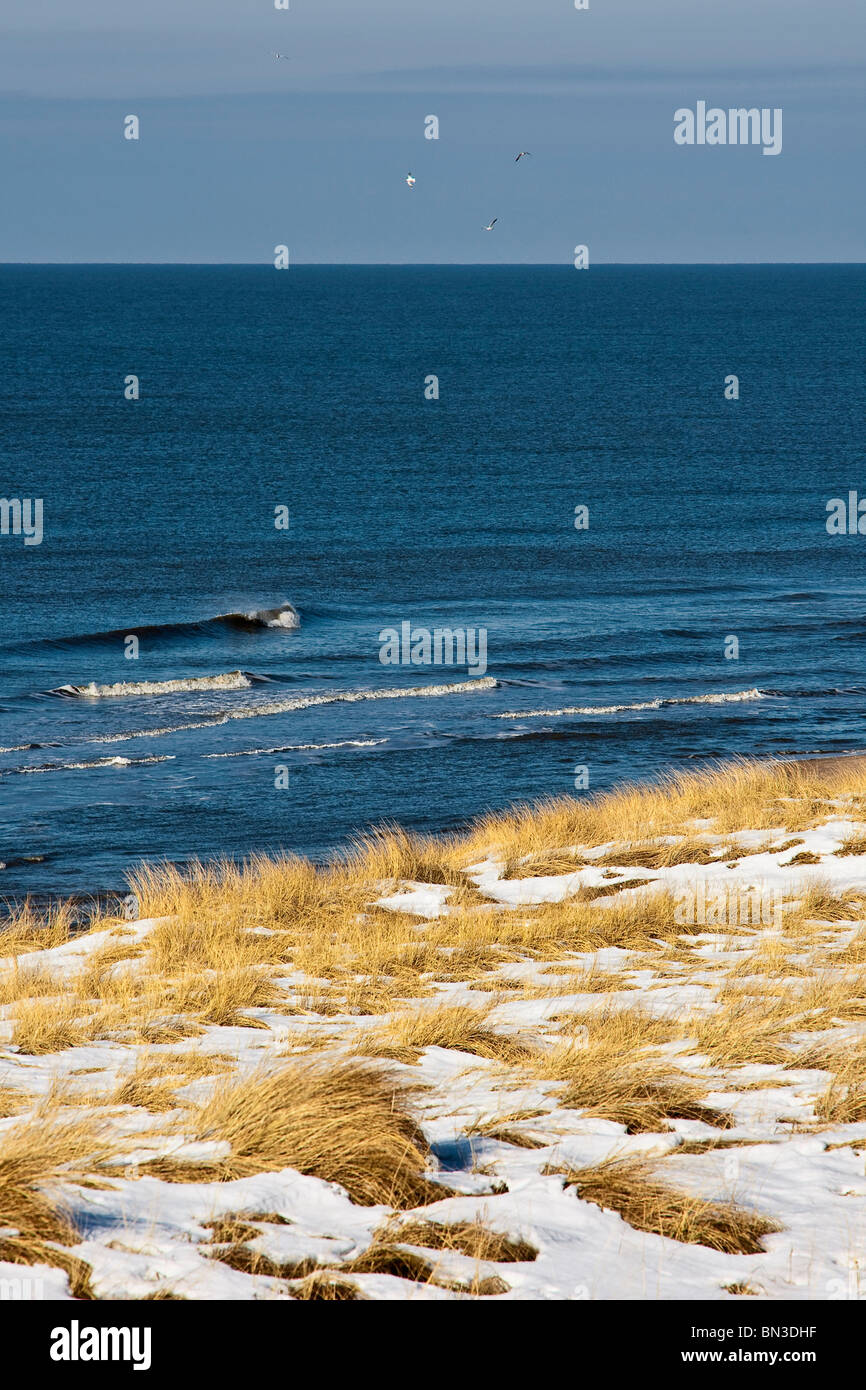 Snow-covered marram grasses at a coast, Rantum, Sylt, Germany, elevated view - Stock Image