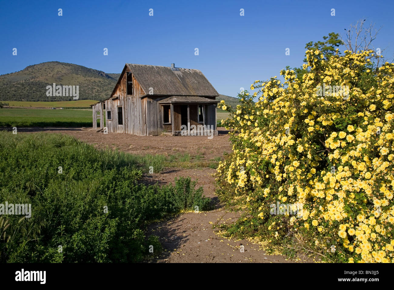 An abandoned, depression era farmhouse, near the town of Culver in Central Oregon. - Stock Image