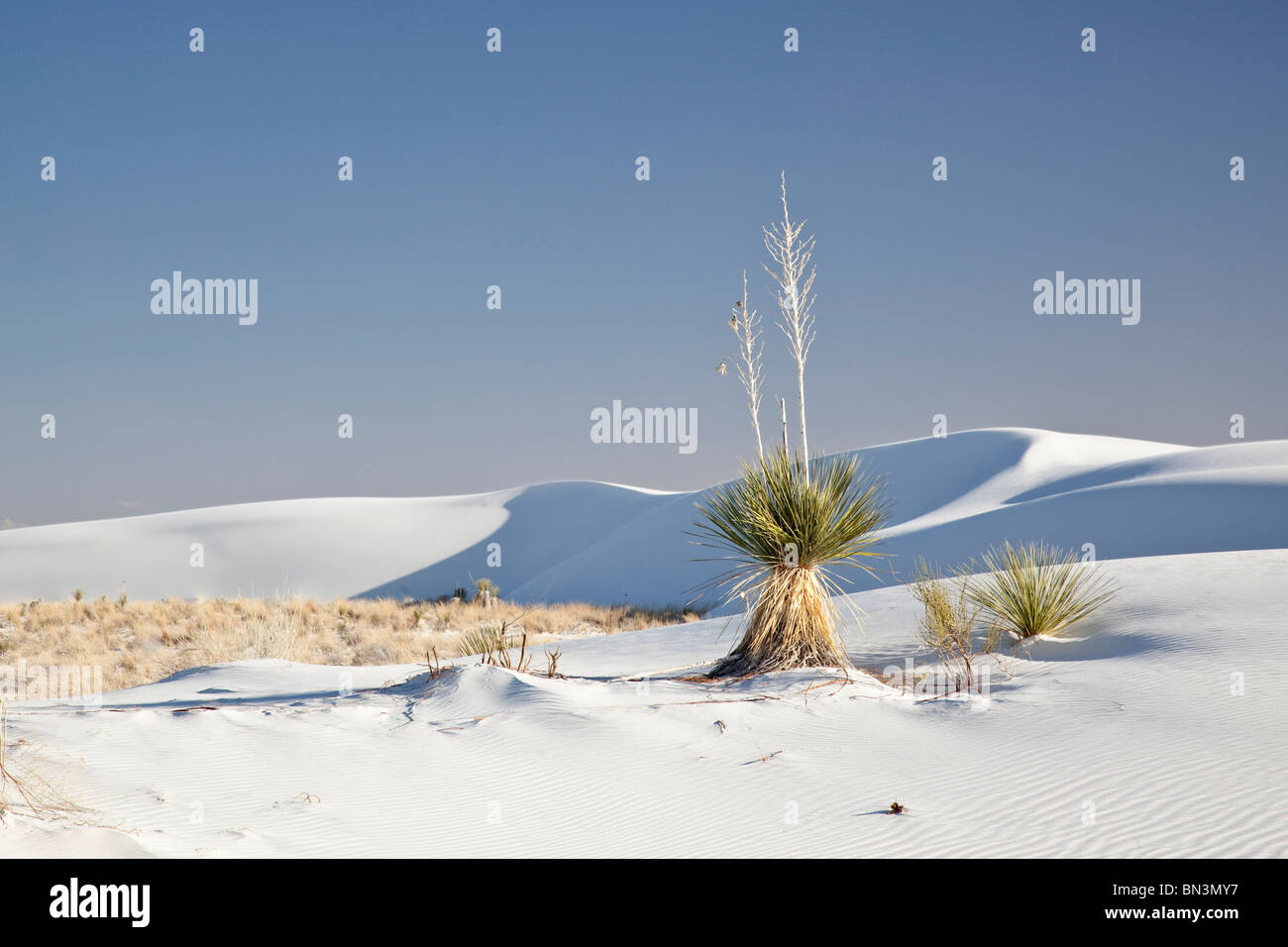 Plants in the White Sands National Monument, New Mexico, USA - Stock Image