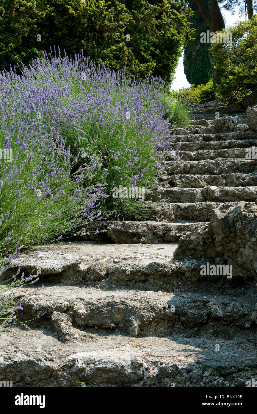 Stone Garden Steps Stone garden steps and lavender plants stock photo 30207002 alamy stone garden steps and lavender plants workwithnaturefo