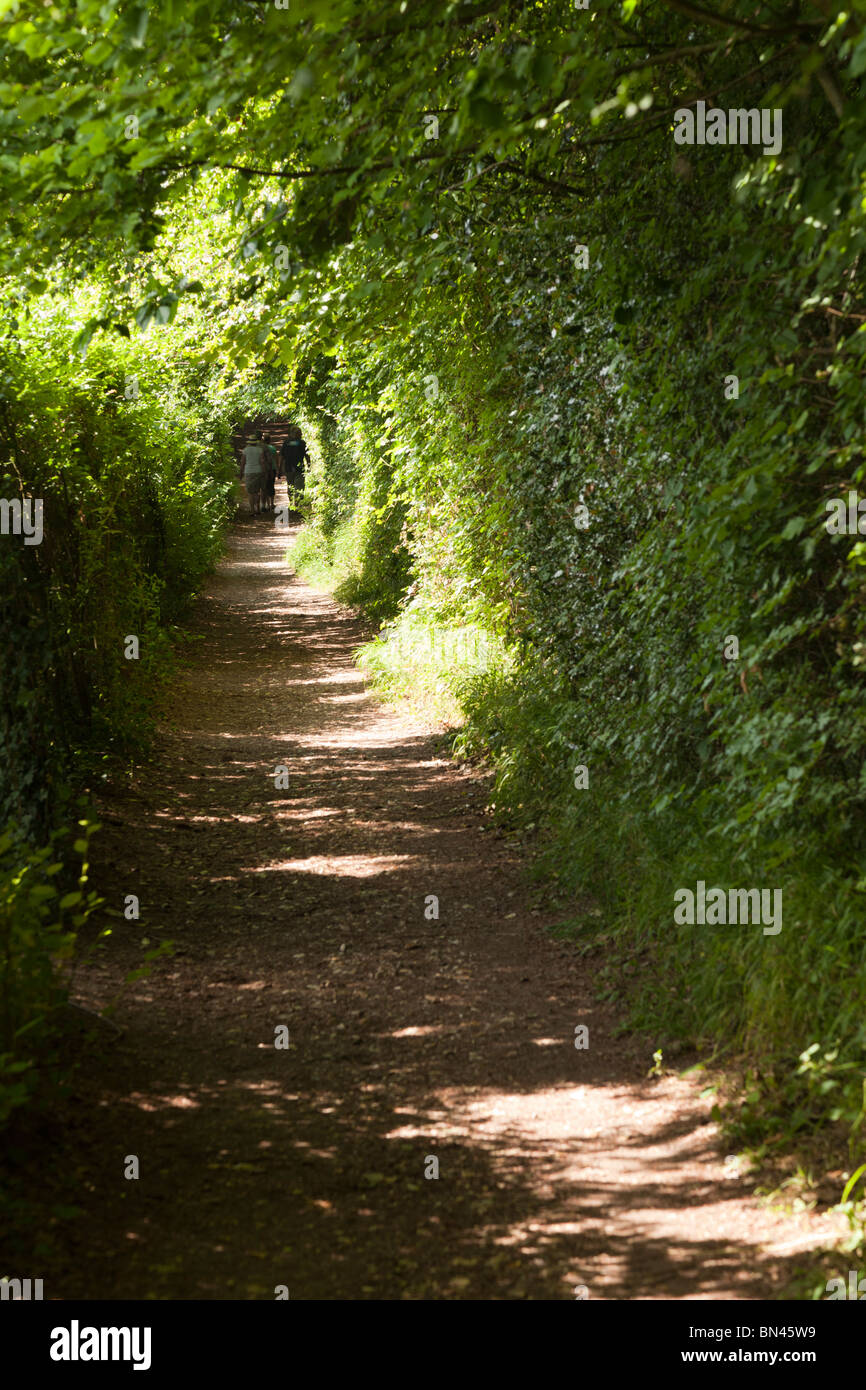 People walking away up narrow footpath boardered by high hedges - Stock Image