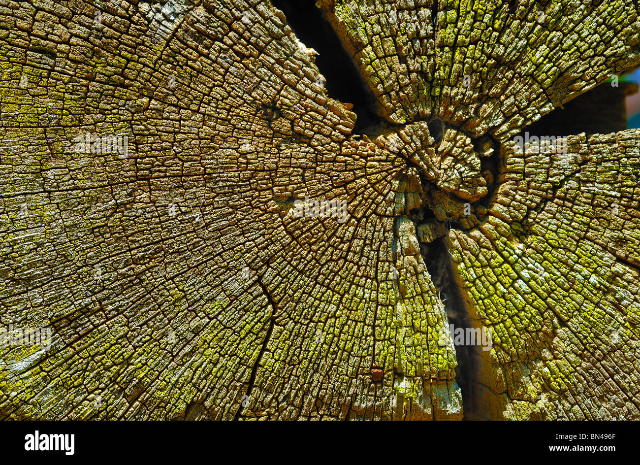 Pattern at the end of a log in a log cabin at Westville, near Plains, Georgia, United States of America - Stock Image