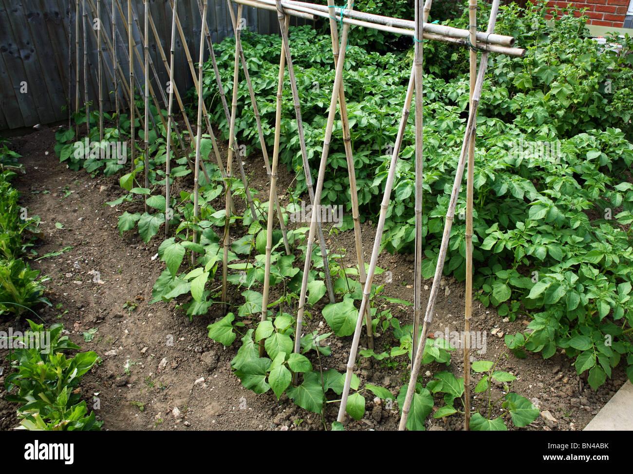 A small garden vegatable plot can grow big supplies of ...