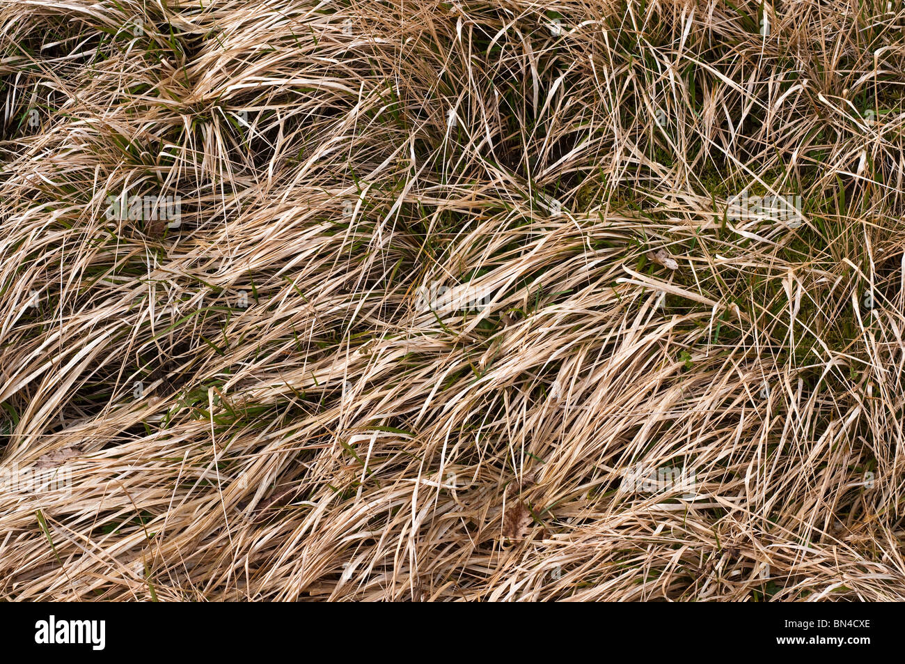 Rough uncut grass at side of road - France. - Stock Image