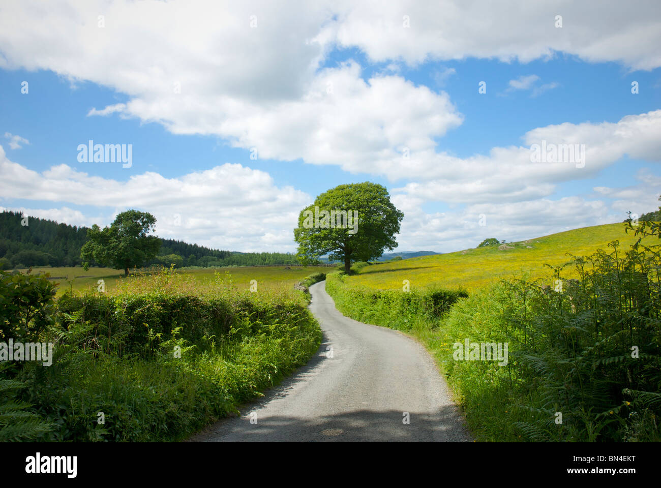 Quiet country lane, Cumbria, England UK - Stock Image