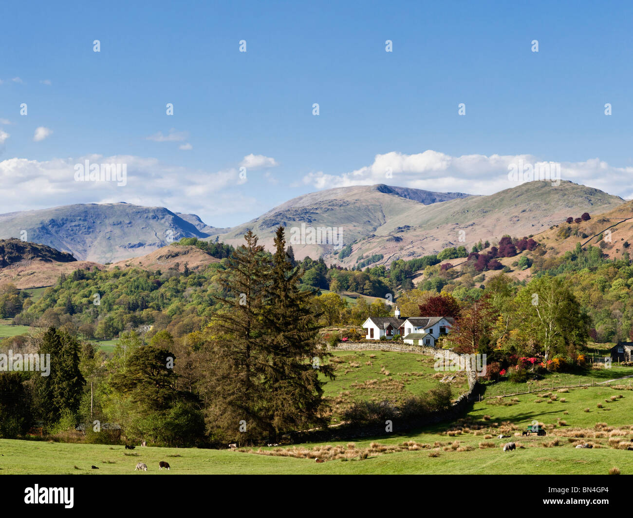 Rural farmhouse north east of Coniston surrounded by mountains in the summer in the Lake District, UK - Stock Image