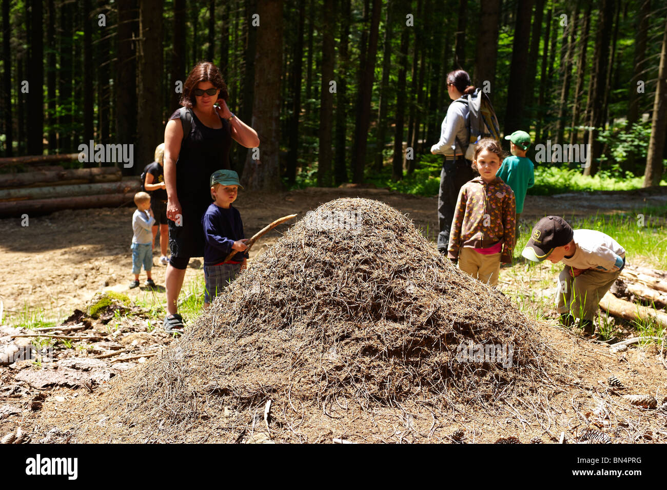 Children looking and examining Anthill, ants colony, Spicak hill, Zelezna Ruda, NP Sumava, Ceska republika - Stock Image