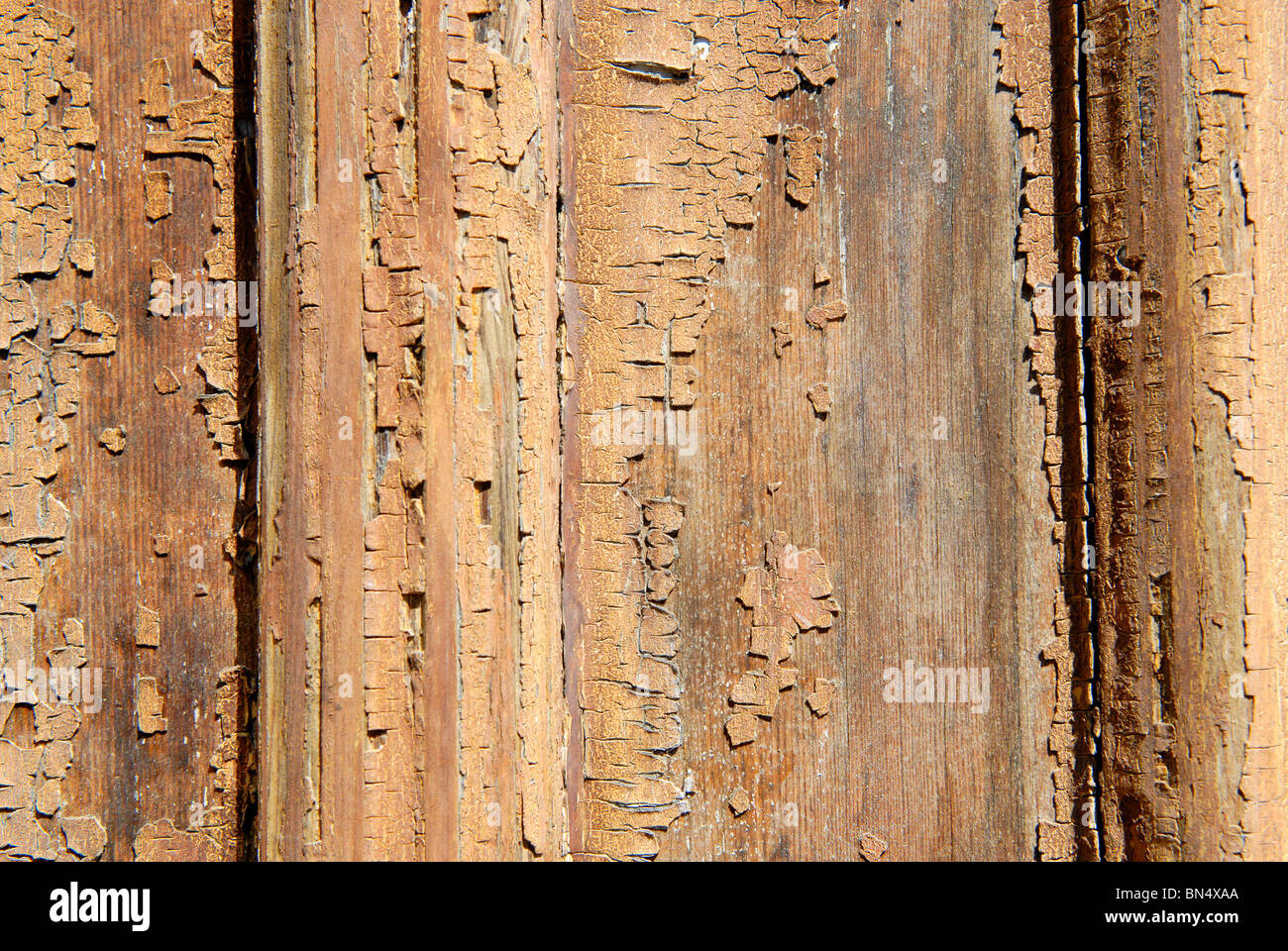 OLD WOODEN DOOR BACKGROUND - Stock Image