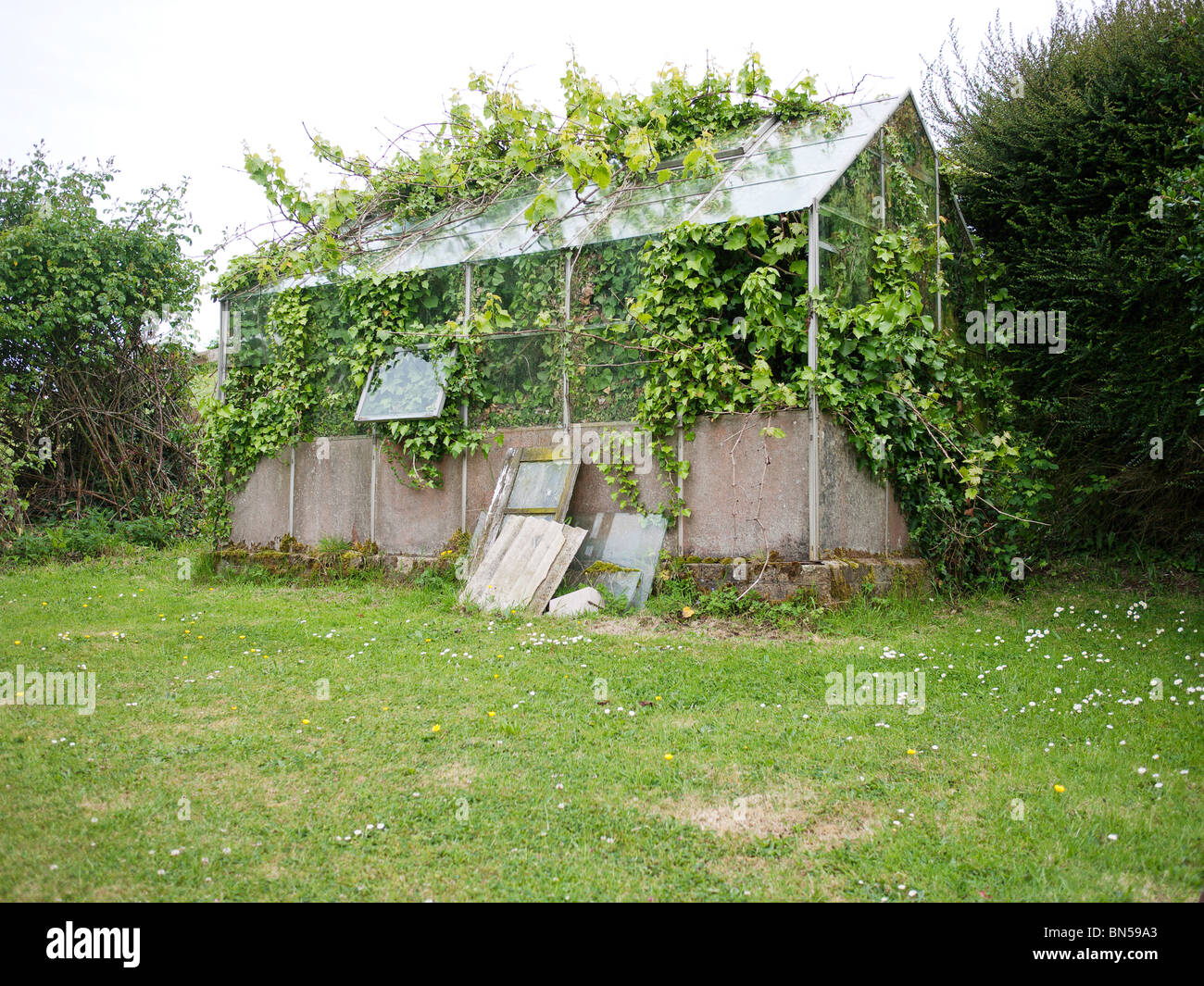 Overgrown greenhouse - Stock Image