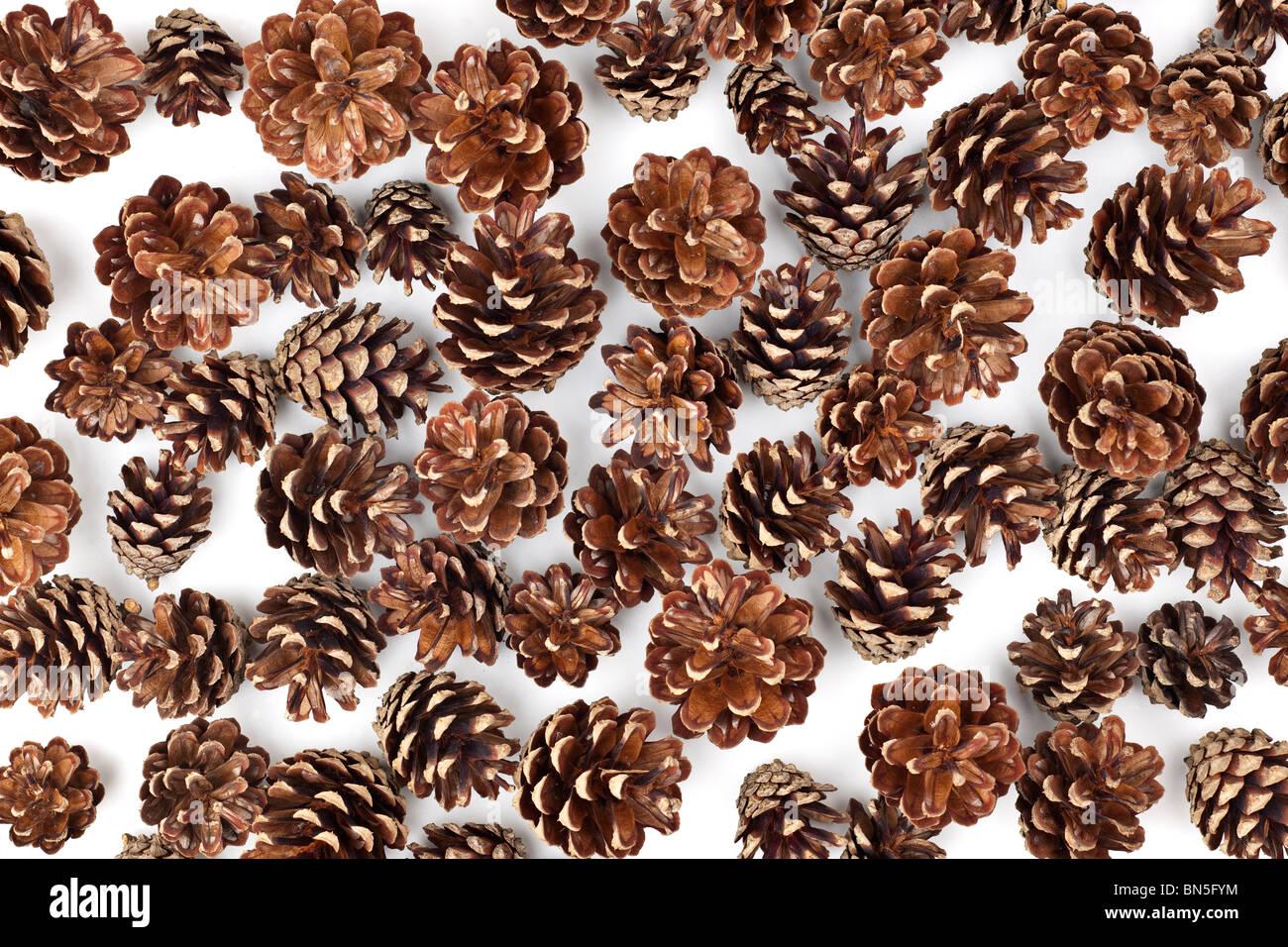 pile of pine cones - Stock Image