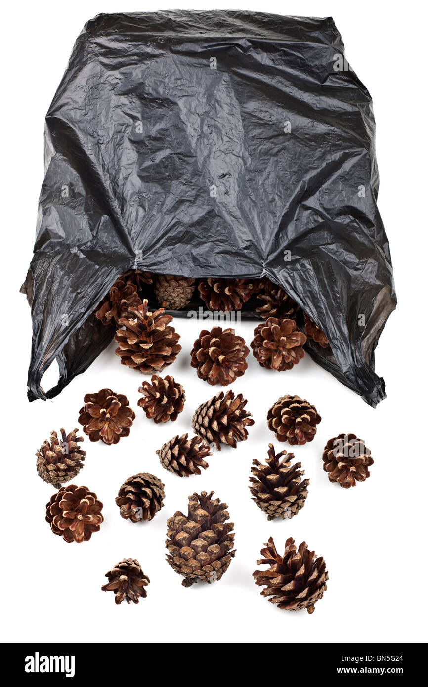 Black plastic bag full of pine cones - Stock Image