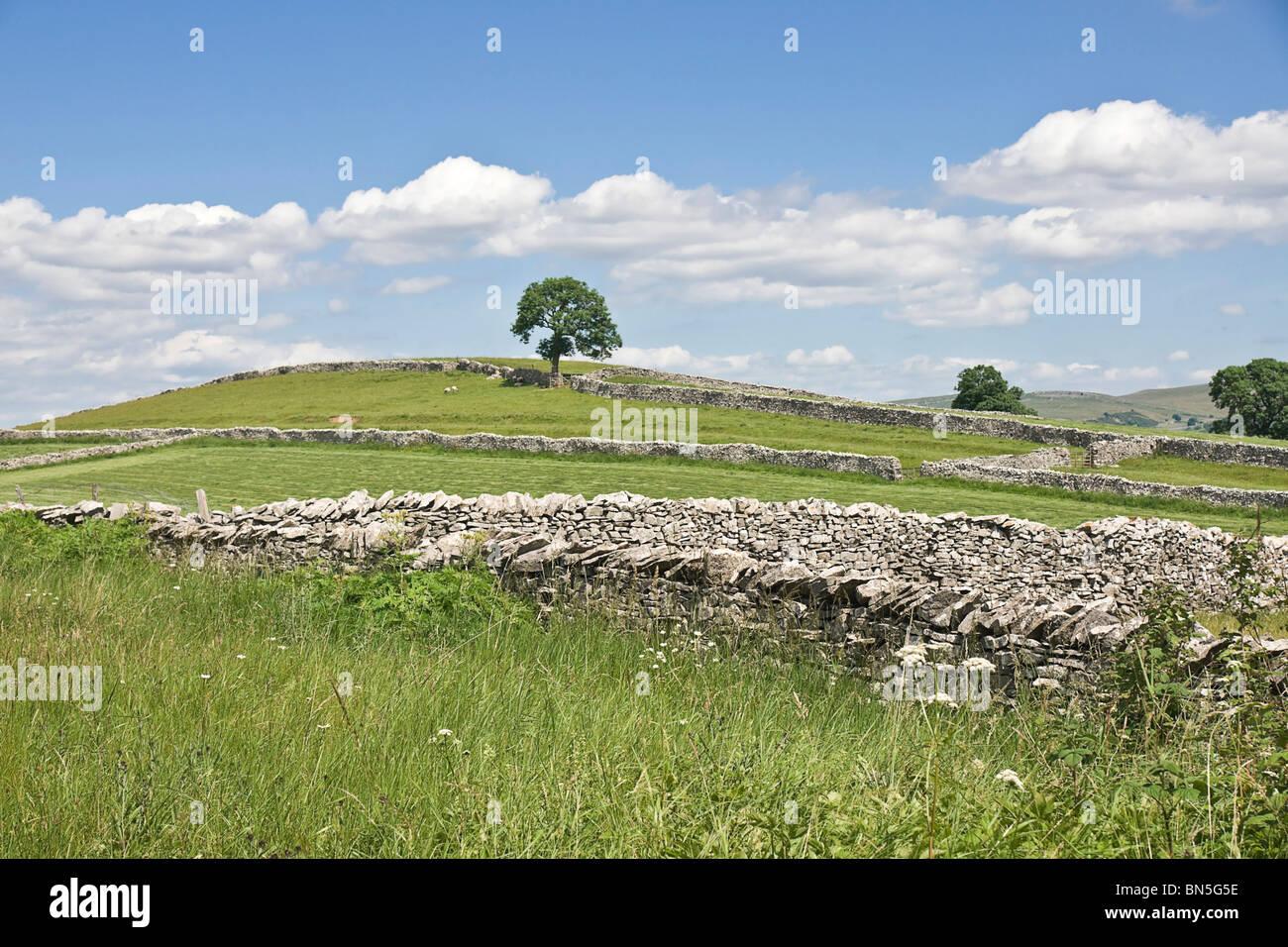 Walls and farmland in Upper Eden Valley near Sedbergh, Cumbria - Stock Image