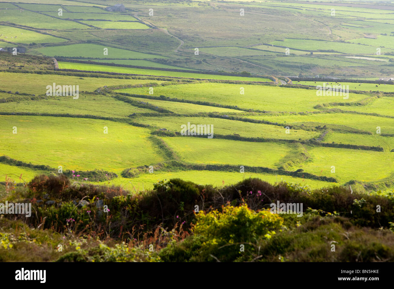 Ancient field boundaries near Bosigran near the Cornwall coast, UK. - Stock Image