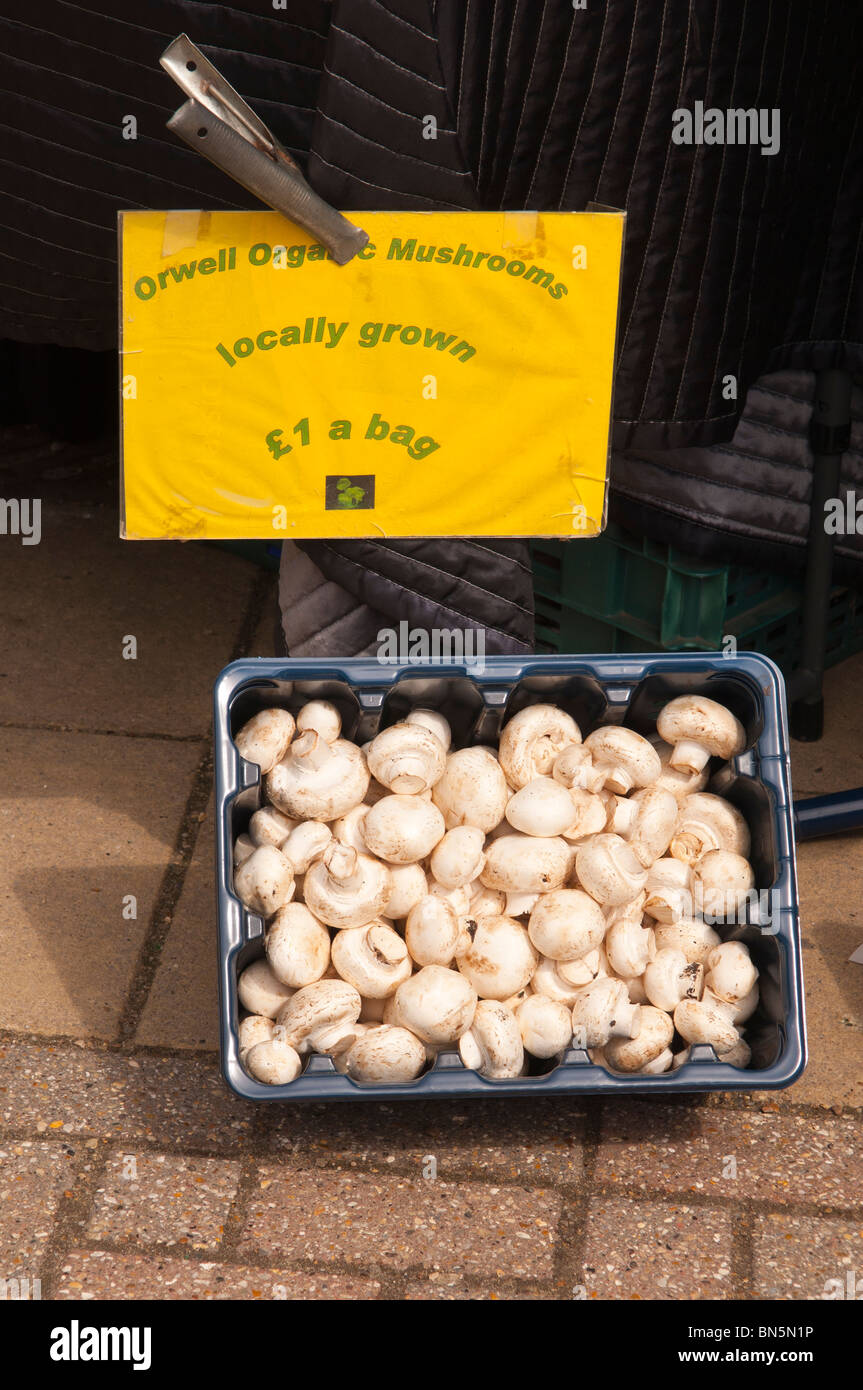 Locally grown organic mushrooms for sale on a market stall in Suffolk , Uk - Stock Image