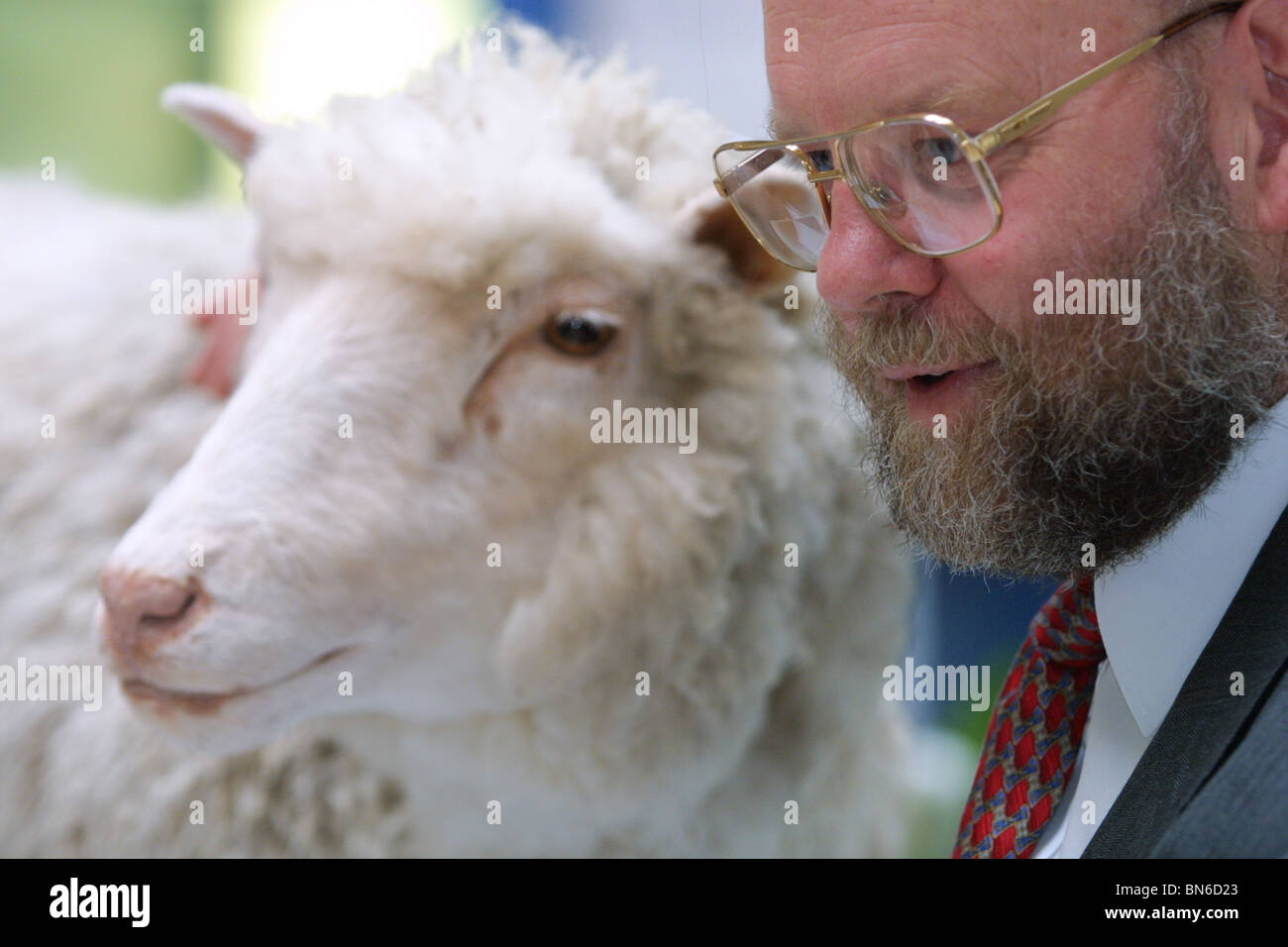 Professor Ian Wilmut stands beside Dolly The Sheep, (the sheep that he help clone, creating the world's first - Stock Image