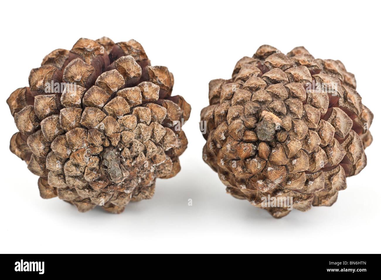 Underside of  two pine cones - Stock Image