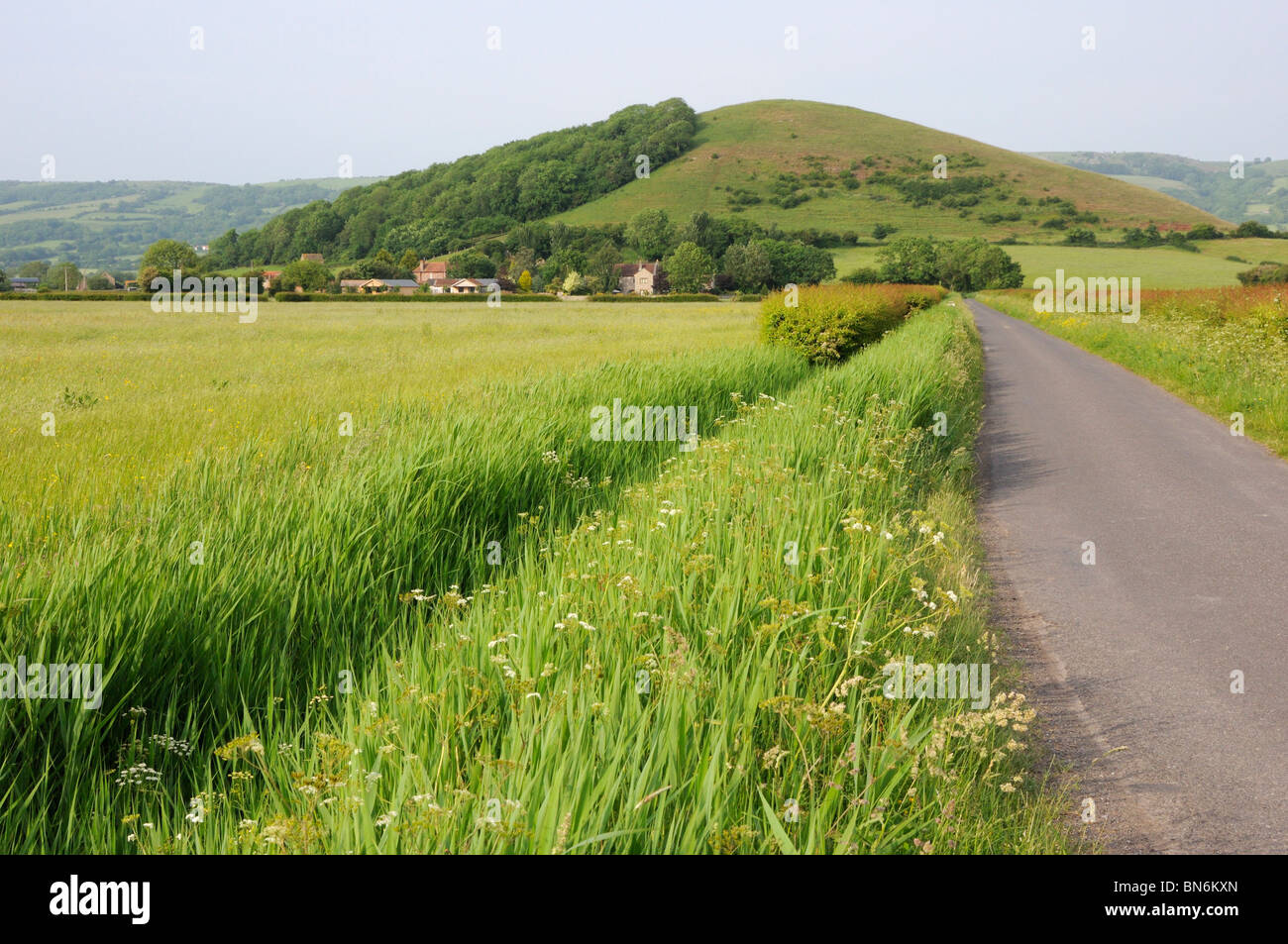 Nyland Hill from the south, Somerset, England, UK. - Stock Image
