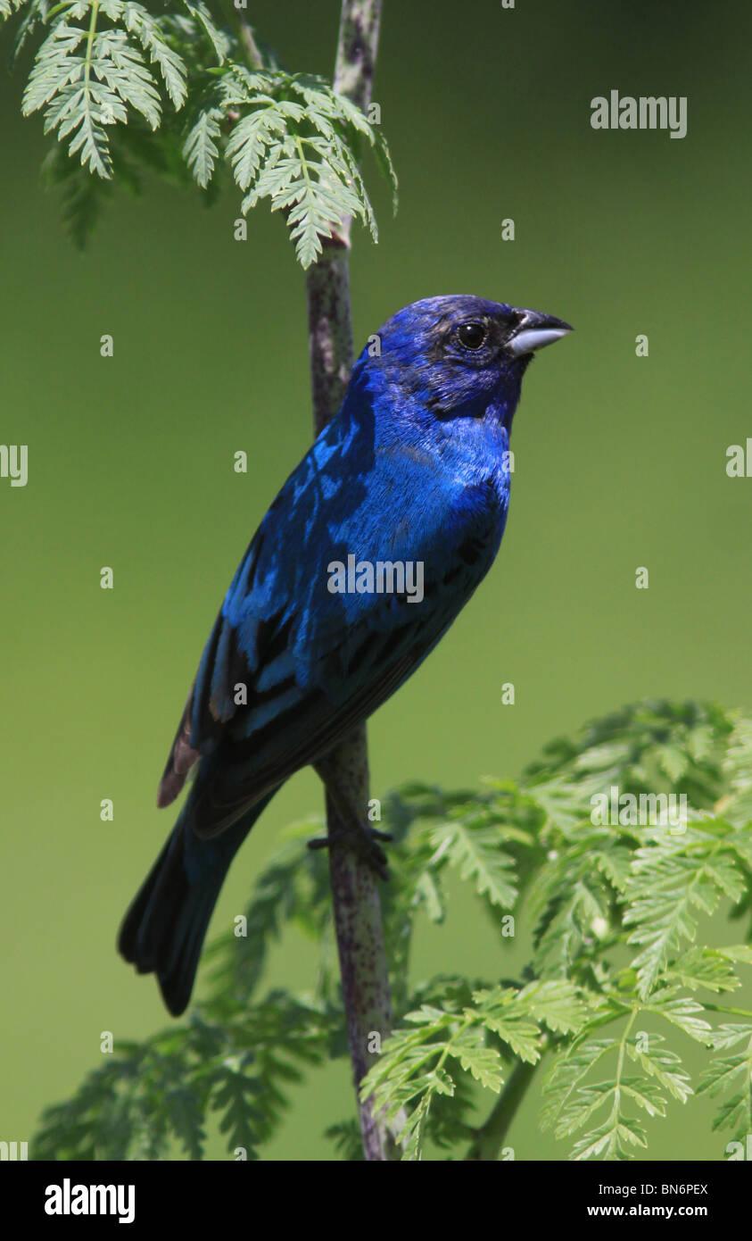 Bird Identification Guide » Bird Watcher's Digest