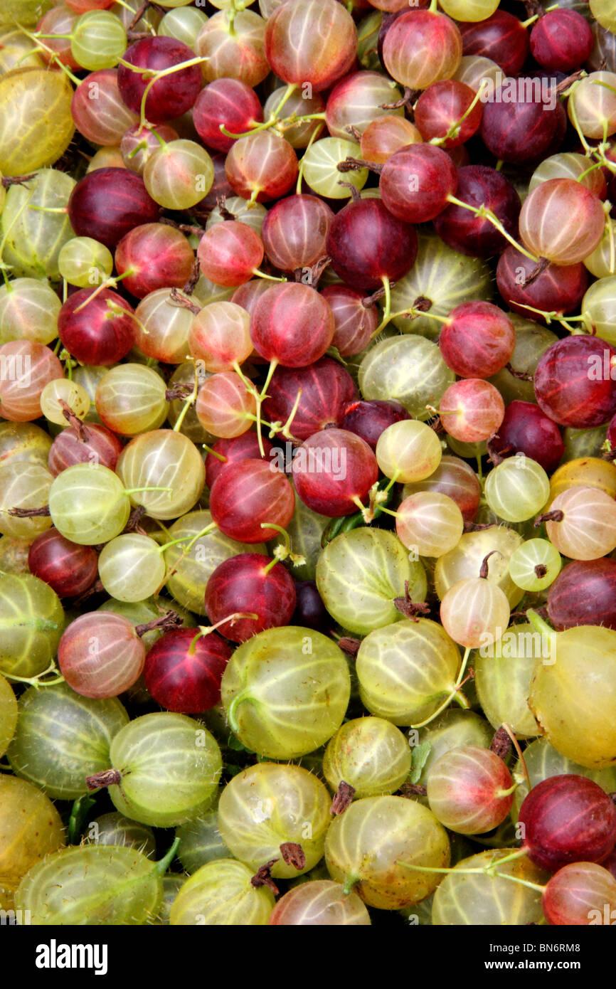 gooseberries - Stock Image