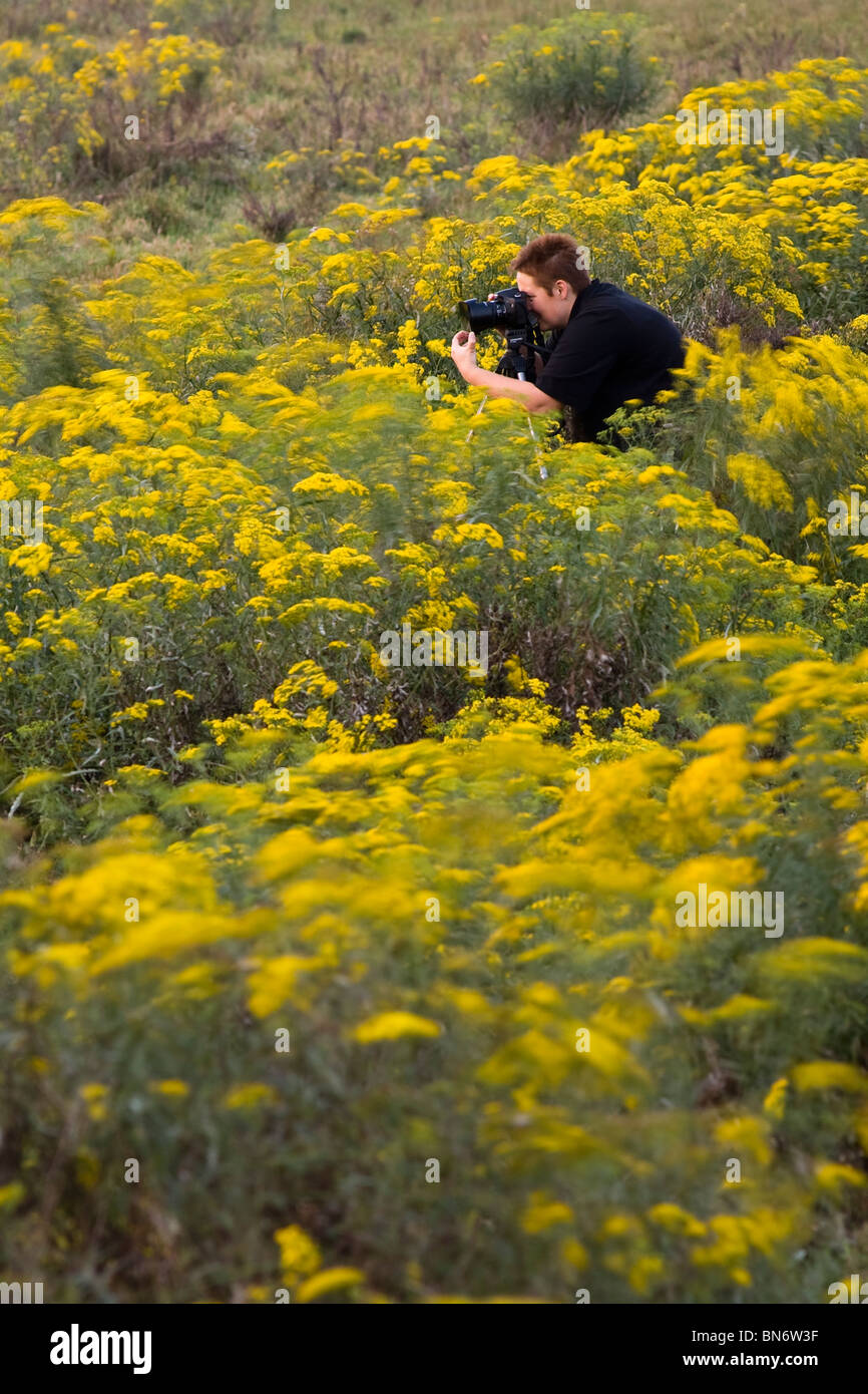 Photographer with camera crouching in field of yellow flowers. St. Lucia Kwazulu-Natal South Africa - Stock Image