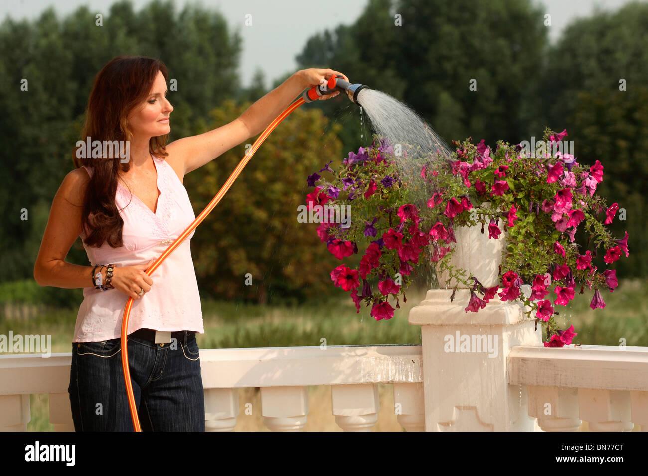 Woman watering Petunia - Stock Image