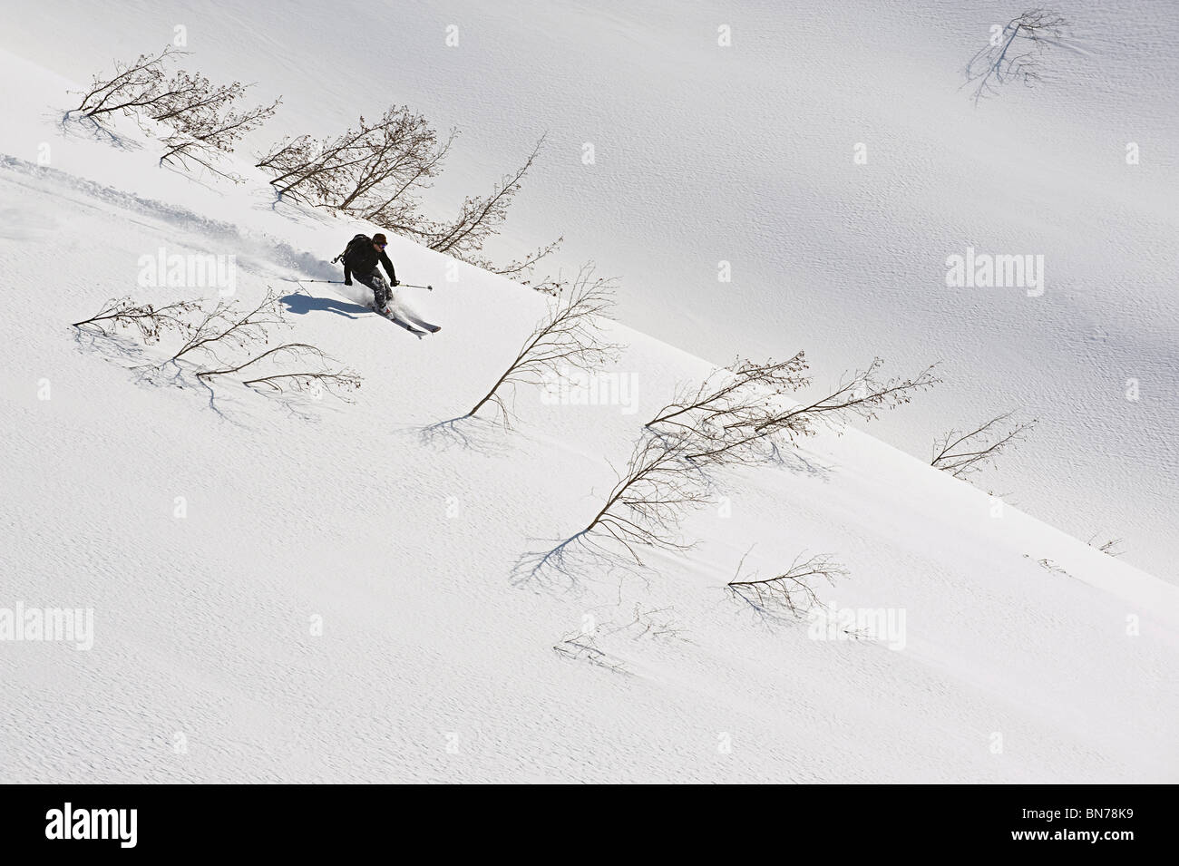 A backcountry skier starts a descent between alders in Turnagain Pass, Alaska - Stock Image
