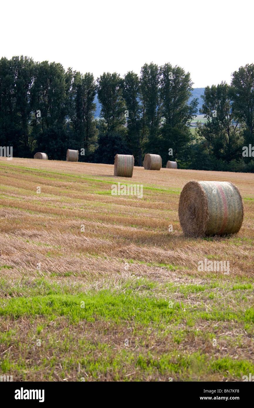 Sommer im Deister - Felder Summer in Germany - Stock Image