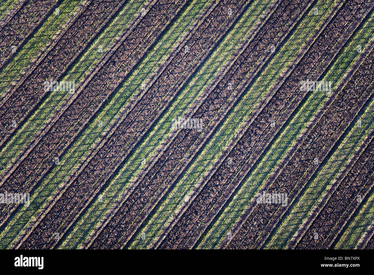 aerial view above grape vine rows vineyard northern California Stock Photo