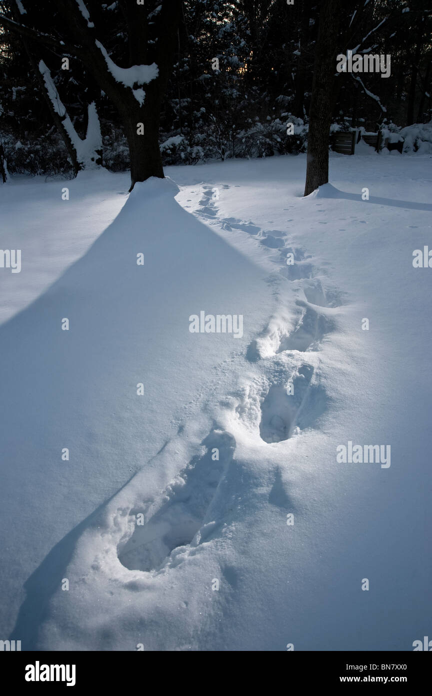 Footprint Tracks In The Deep Snow, Pennsylvania, USA - Stock Image