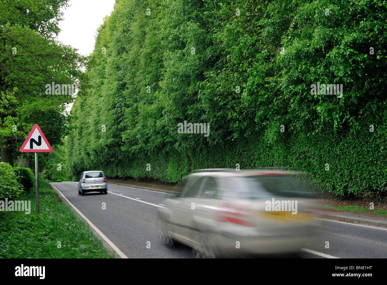 The Meikleour Beech Hedge (Fagus sylvatica), tallest and longest hedge on earth, Scotland, UK - Stock Image