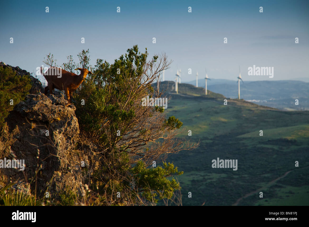Goat on mountain top Stock Photo