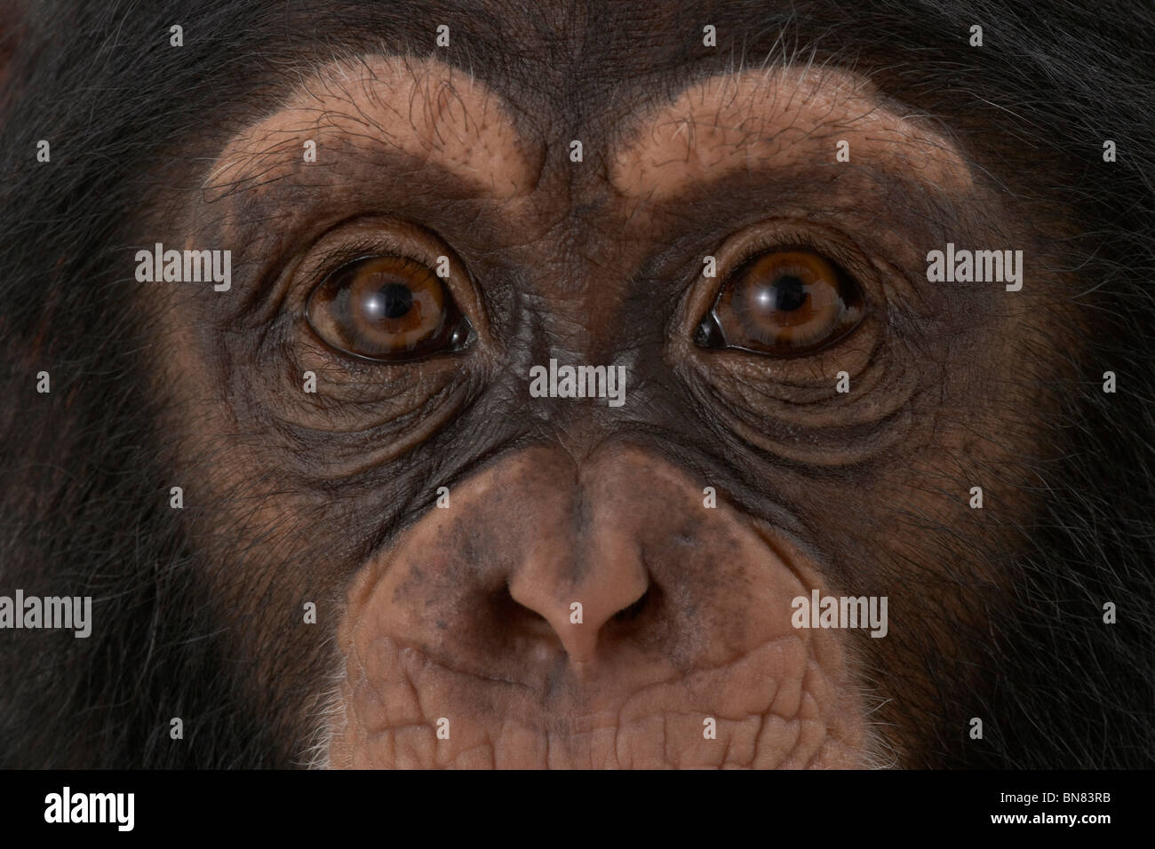 Who are you looking at ? - Stock Image