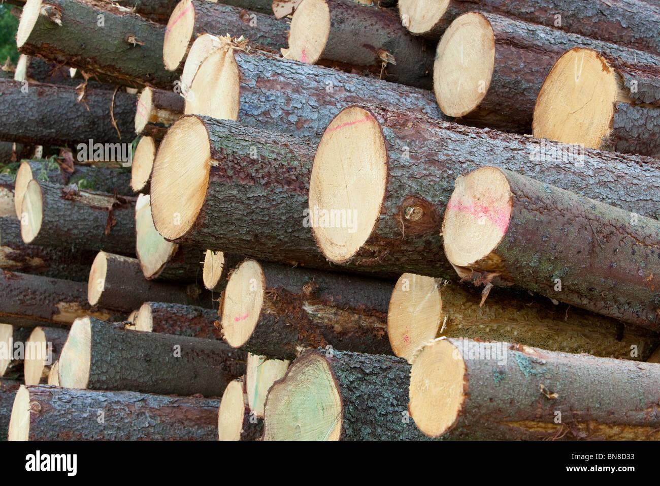 Spruce logs - Stock Image