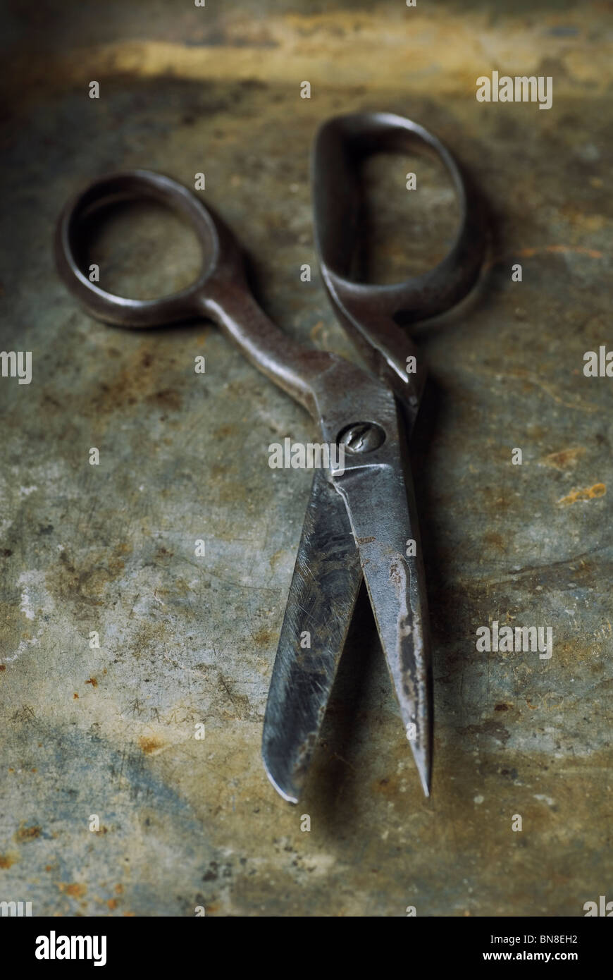 Old rusty tailor's pair of scissors - Stock Image