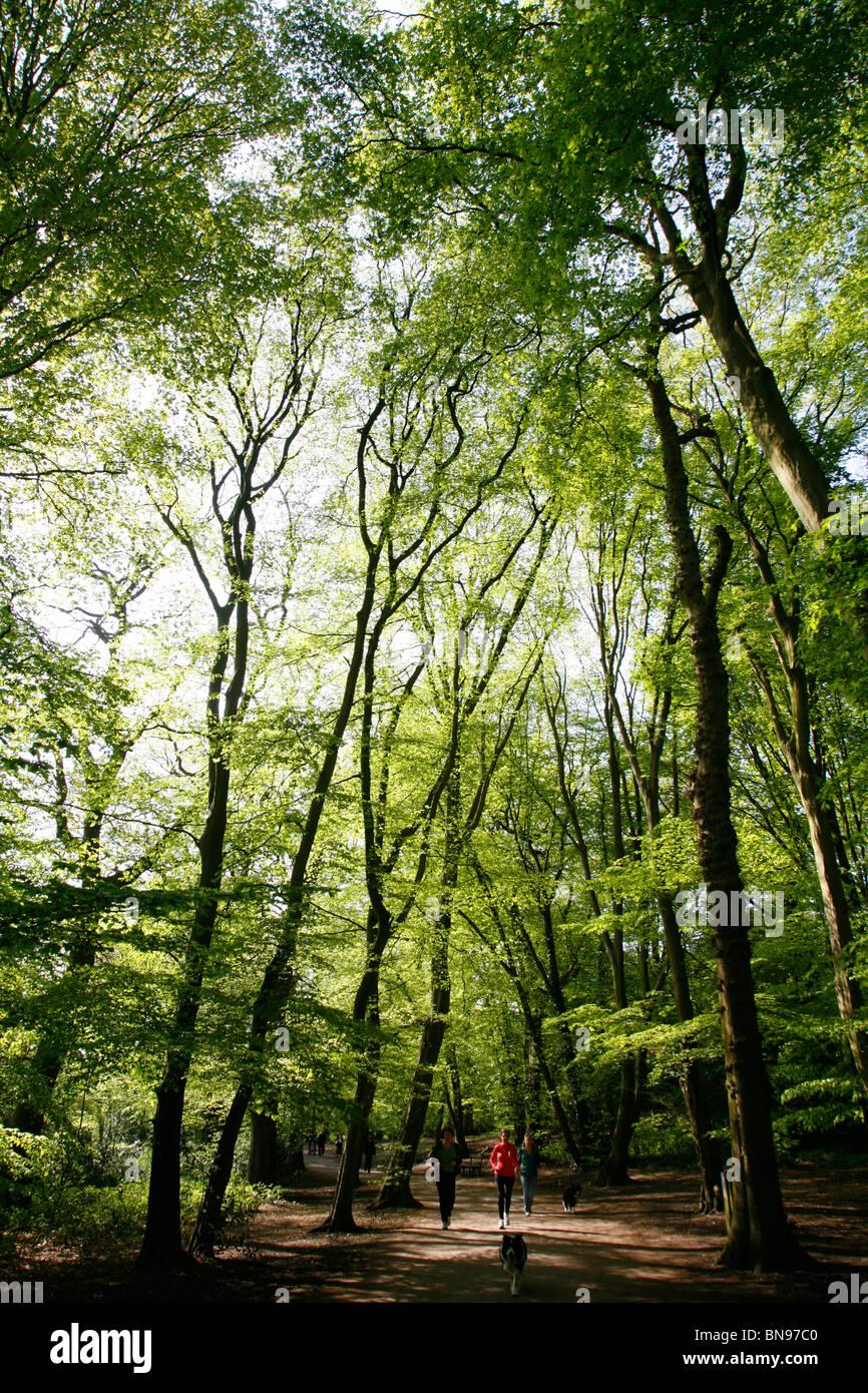 Highgate Wood, Highgate, London, UK - Stock Image