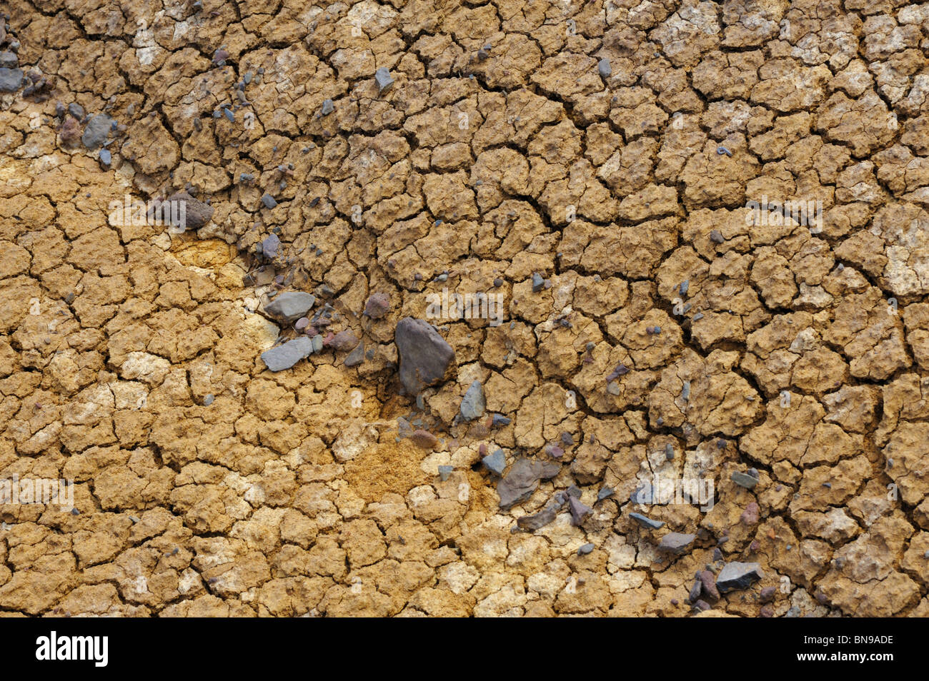 Cracked dry ground texture - background Stock Photo