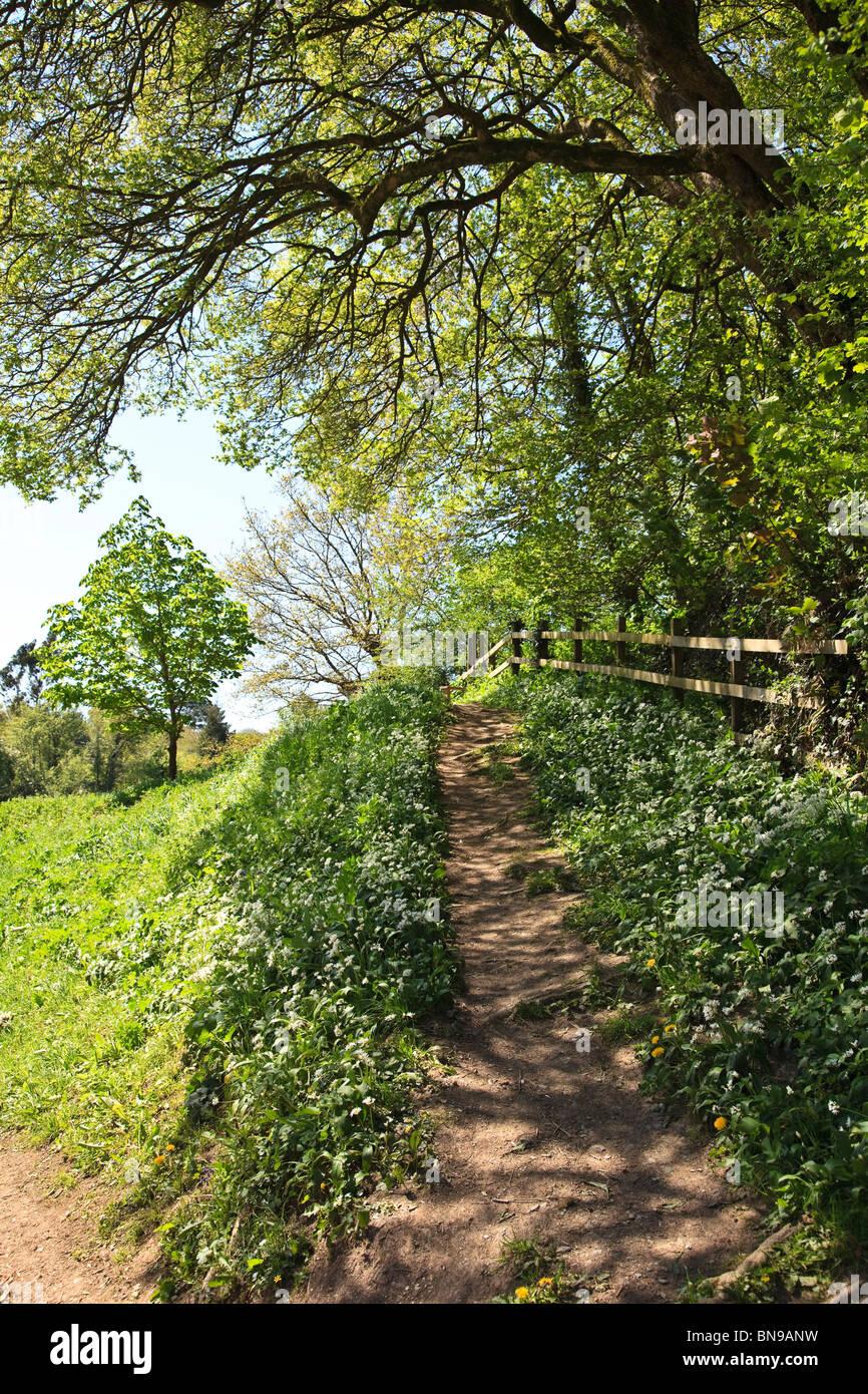 Woodland walk with shadows of trees on path, leafy dappled light - Stock Image
